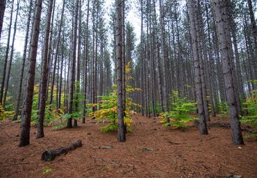 manistee-national-forest